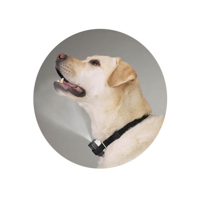 Anti Bark Collar - Spray Collar