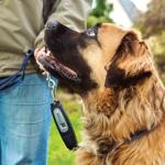 Patento Pet DOG-e-Walk Premium Dog Trainers