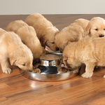 ProSelect Puppy Dishes