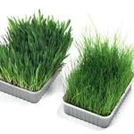 Karlie cat Grass