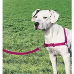 PetSafe Easy Walk Dog Harness - Raspberry/Grey - Non-Pull
