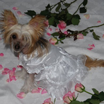 Petsters Yappily Ever After Dog Wedding Gown