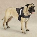 Guardian Gear Excursion Pet Harnesses