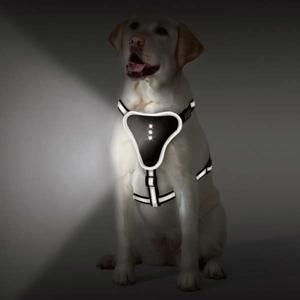 Zack & Zoey Illuminate LED Reflective Harnesses