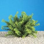 Cambridge Aquatics Deluxe Plastic Plants Asian Ambulia