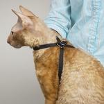 Adjustable Nylon Cat Harness