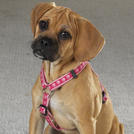 GG Two Tone Pawprint Harness - Pink