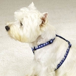 Two Tone Pawprint Harness - Blue