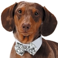 Royale Dog Bowties - Shimmer Sequin