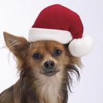 Aria Santa Hats