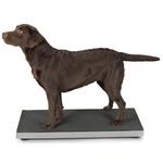 Petsters Veterinarien Pet Scale (2 sizes)