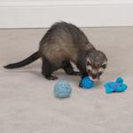 Biddie Buddies Ferret Toys 3-Packs - Blue